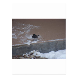 野生の鳥(オクラホマ) ポストカード