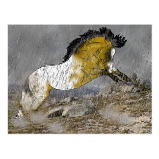野生のBuckskinのAppaloosaの馬 ポストカード