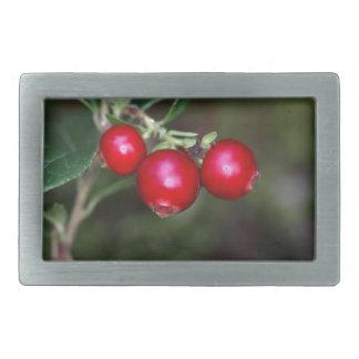 野生のlingonberry (スノキ属vitis ideの果実 長方形ベルトバックル