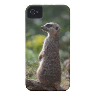 野生のMeerkat Case-Mate iPhone 4 ケース