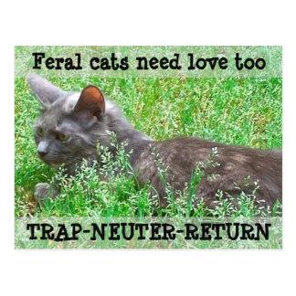 野生猫は愛- TNR --を必要とします ポストカード