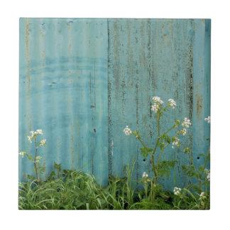 野生花の自然の青いペンキの塀の質 タイル