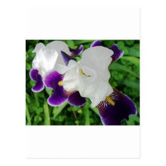 野生Flower#1 ポストカード