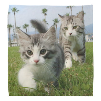 野良猫ニャン吉【ニャ太郎と一緒】 バンダナ