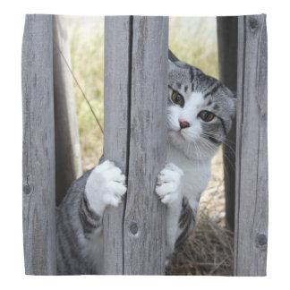 野良猫ニャン吉【逃走中】 バンダナ