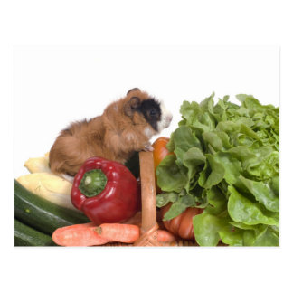 野菜のバスケットのモルモット ポストカード