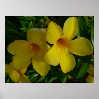 金トランペット花IIの熱帯花柄 ポスター