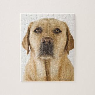 金ラブラドル・レトリーバー犬(イヌ属のfamiliaris)。 ジグソーパズル