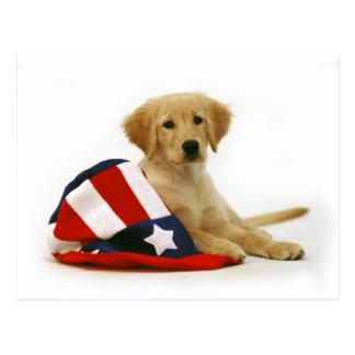 金子犬および米国市民帽子 ポストカード