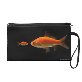 金魚3 リストレット
