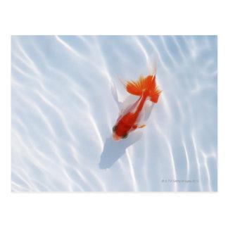 金魚5 ポストカード