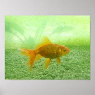 金魚 ポスター