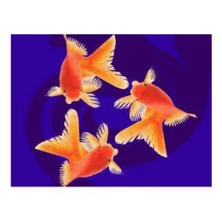 金魚 ポストカード