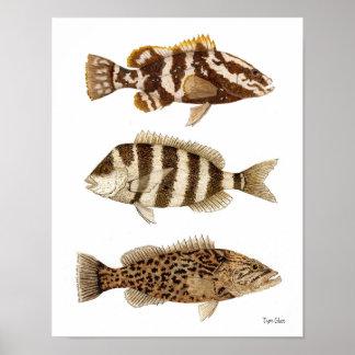 釣魚のナッサウのハタ、Sheepshead及びギャグのハタ ポスター