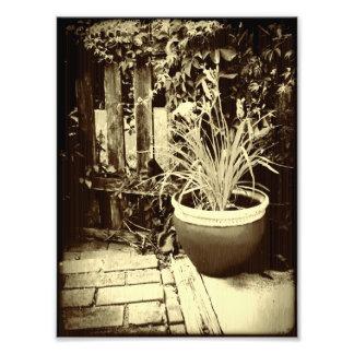 鉢植えなLilly フォトプリント