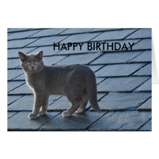 銀色の灰色の子ネコのハッピーバースデーカード カード