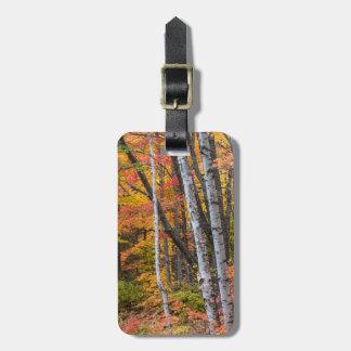 銅港の近くの森林の秋色 ラゲッジタグ