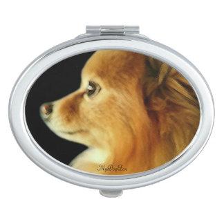 鋭い目のポメラニア犬
