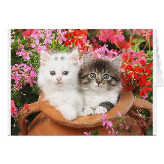 鍋の子ネコ グリーティングカード