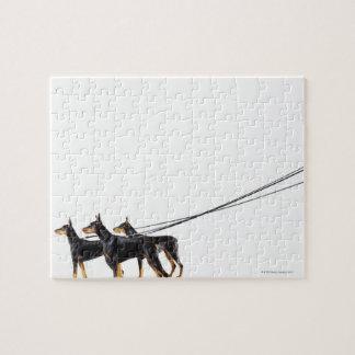 鎖の3匹のドーベルマン犬 ジグソーパズル