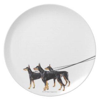 鎖の3匹のドーベルマン犬 パーティープレート