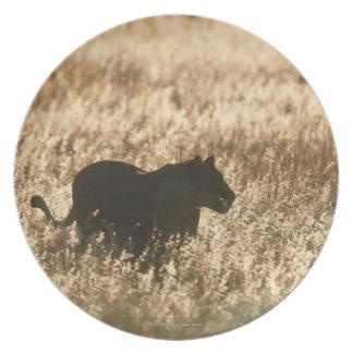 長い草でシルエットを描かれる雌ジシ(ヒョウ属レオ) プレート