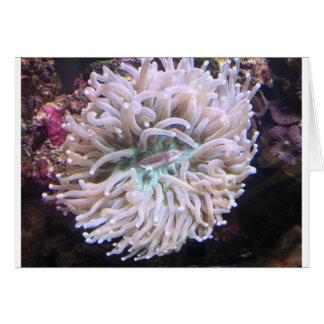 長い触手のプレートの珊瑚 カード