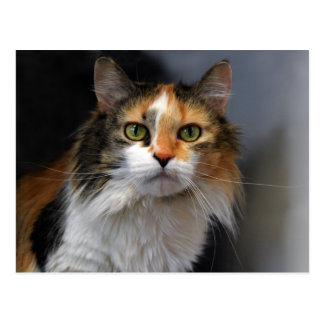 長い髪の茶色のぶち猫 ポストカード