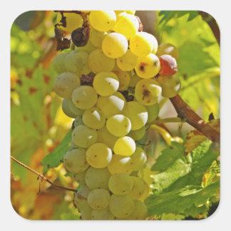 長く植わるブドウ園のChasselas - スクエアシール
