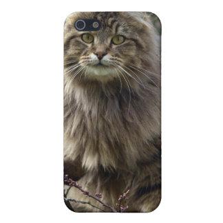 長髪の虎猫猫の動物のiPhoneの場合 iPhone 5 カバー