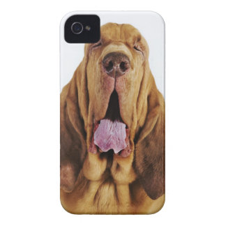 閉鎖した目を持つブラッドハウンド(St.ヒューバートの猟犬)、 Case-Mate iPhone 4 ケース