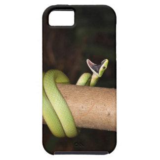 開いた口を持つ緑ヘビ iPhone SE/5/5s ケース