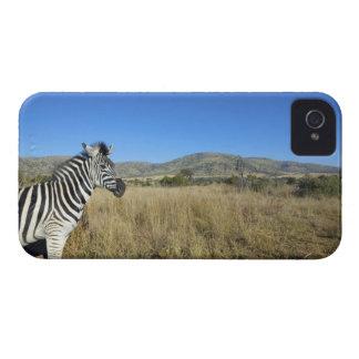 開いた平野、Pilansbergの国立公園のシマウマ、 Case-Mate iPhone 4 ケース