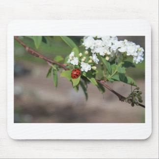 開花のそう白い花の近くで休んでいるBug女性 マウスパッド