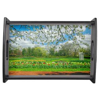 開花のエリザベス公園 トレー