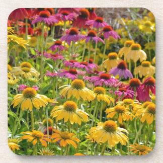 開花のカラフルなechinaceaの花 コースター