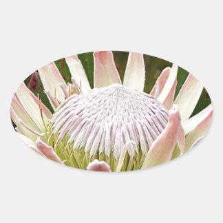 開花のクリーム色のプロテアの花 楕円形シール