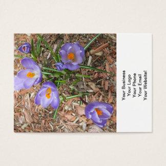 開花のクロッカスの花 名刺