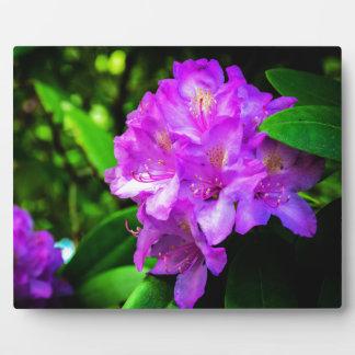 開花のシャクナゲ フォトプラーク