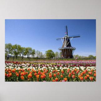 開花のチューリップが付いている風車の島公園の ポスター