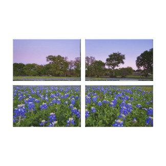 開花のテキサス州Bluebonnets キャンバスプリント