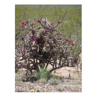 開花のニューメキシコCholla ポストカード