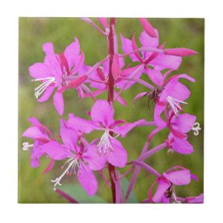 開花のピンクのアラスカのFireweedの花 正方形タイル小
