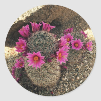 開花のピンクのサボテン ラウンドシール