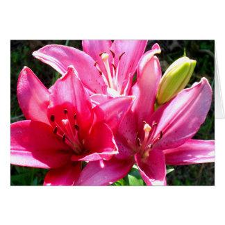 開花のピンクユリ カード