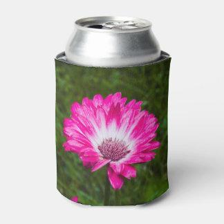 開花のピンク及び白いガーベラのデイジー 缶クーラー