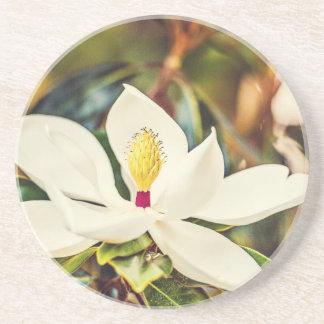 開花のマグノリア コースター