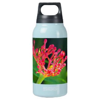 開花の珊瑚ブッシュ 断熱ウォーターボトル