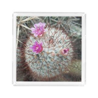 開花の砂漠の植物の南西装飾のサボテン アクリルトレー