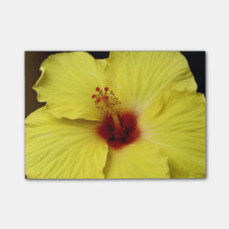 開花の黄色いハイビスカスの中国人のばら色の花 ポストイット